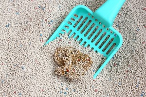 White Sodium Bentonite Cat Litter with cat sand scoop