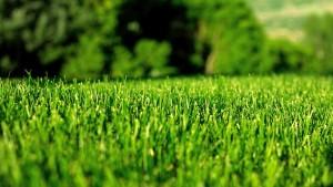 green-lawn-1366x768