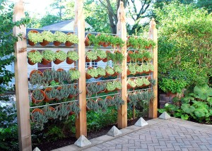 vertical_garden_privacy